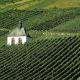 Ein Weinberg mit einer kleinen Kapelle